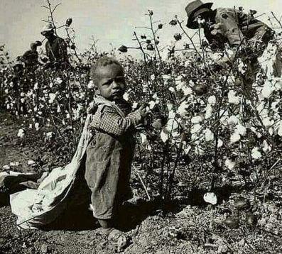 baby picking cotton